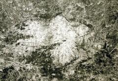 Philip Loersch – Weißer Baum, 2015